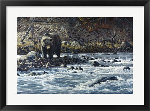 Framed Along The Yellowstone - Grizzly Print
