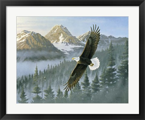 Framed Soaring Eagle Print
