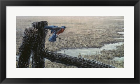 Framed April Showers - Eastern Bluebird Print
