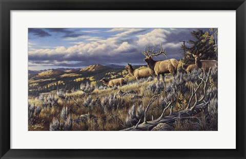 Framed King Of The Hill - Elk Print