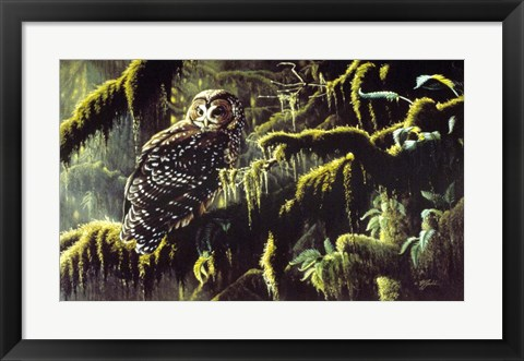 Framed Spirit Of Ancient Forests - Spotted Owl Print