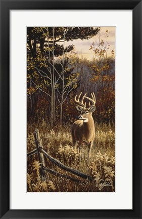 Framed Autumn Whitetail Print