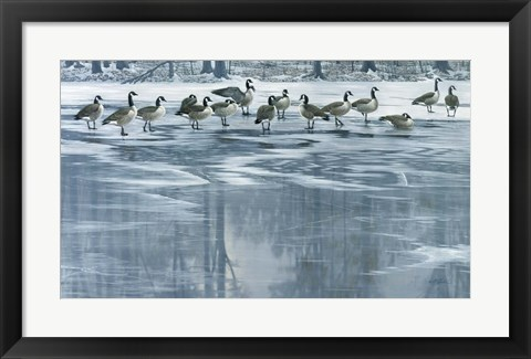 Framed Midwinter Thaw Print