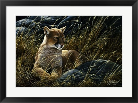 Framed Cougar In The Grass Print