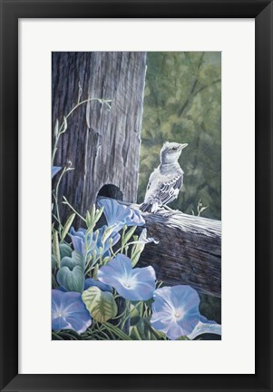 Framed Fledgling - Young Mockingbird Print