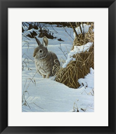 Framed Snow Cover Cottontail Print