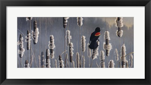 Framed Marsh Notes - Red Wing Blackbird Print