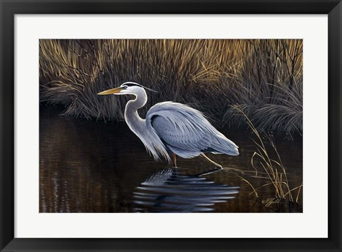 Framed Making Strides - Great Blue Heron Print