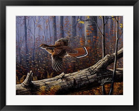Framed Windfall Glider - Ruffed Grouse Print