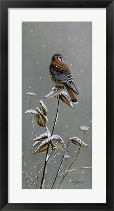 Framed Gentle Snowfall - Kestrel Print