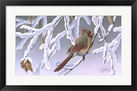 Framed Winter Lady - Cardinal Print