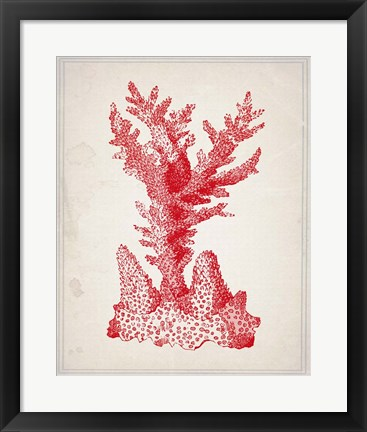 Framed Red Coral 1 Print