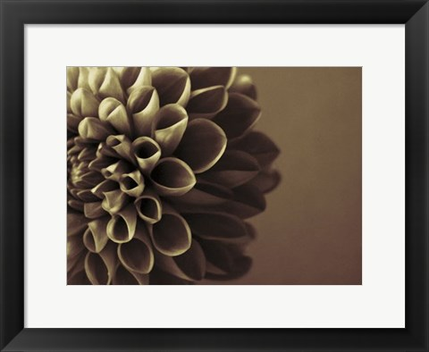 Framed Chocolate Dahlia I Print