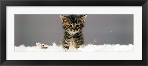 Framed Kittin - In Feathers Print