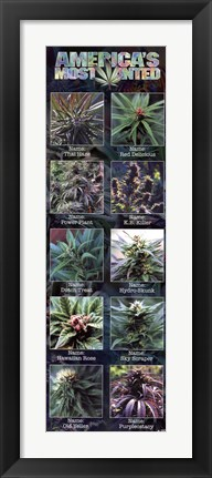 Framed Americas Most Wanted - Weed Print