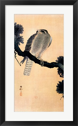 Framed Falcon On A Branch Print