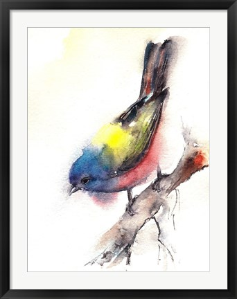 Framed Bunting Bird Print