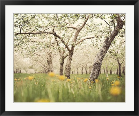 Framed Quiet Orchard Print