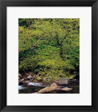 Framed Little Pigeon River, Great Smoky Mountains National Park Print