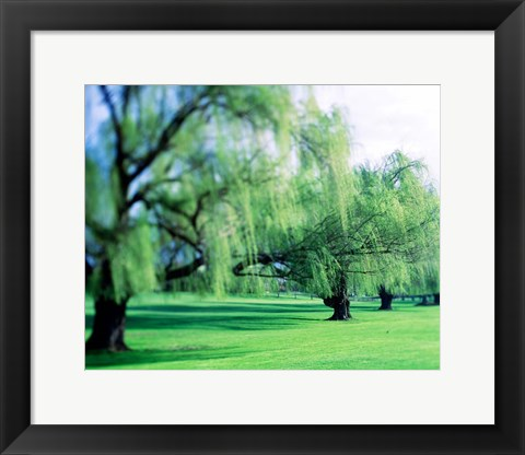 Framed Willow Trees Print