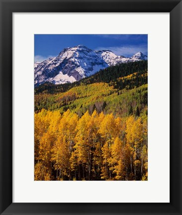 Framed Uncompahgre National Forest, CO Print