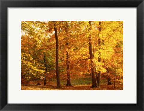 Framed Autumn Trees, Cumbria, England Print