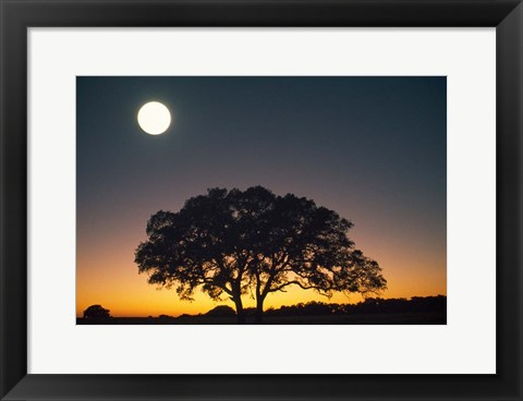 Framed Full Moon Over Silhouetted Tree Print