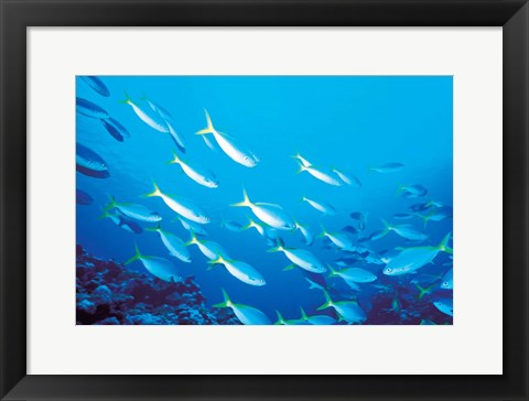 Framed School of Fish Underwater Print