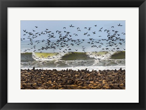 Framed Cape Fur Seals, Cape Cross, Namibia Print
