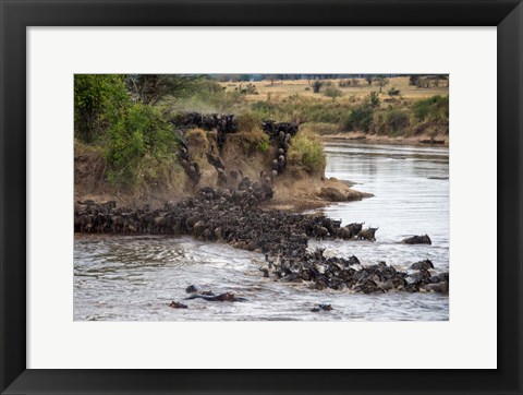Framed Wildebeests crossing Mara River, Serengeti National Park, Tanzania Print