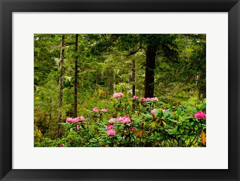 Framed Pacific Rhododendron Flowers Print