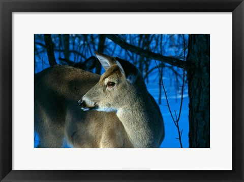 Framed Deer Doe in Snowy Woods Print