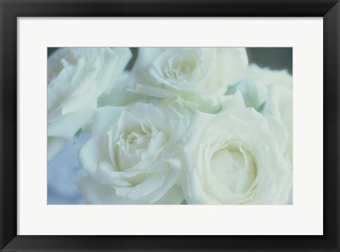 Framed Flowers Roses Print