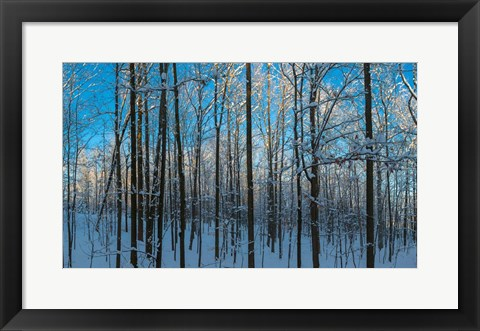 Framed Winter Ice on Trees, New York State, USA Print