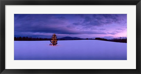 Framed Christmas Tree in the Snow, New London, New Hampshire Print
