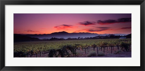 Framed Vineyard At Sunset, Napa Valley, California Print