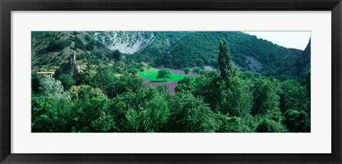 Framed Cherry Trees in Lavender fField, Provence-Alpes-Cote d'Azur, France Print