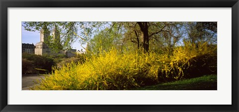 Framed Central Park in spring with buildings in the background, Manhattan, New York City, New York State, USA Print