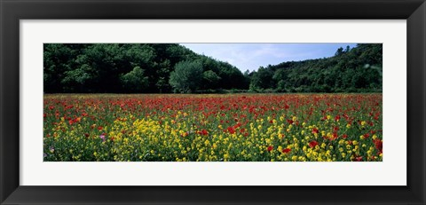 Framed Poppy Field, France Print