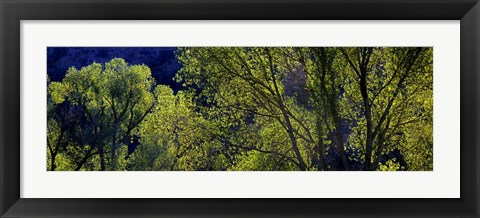 Framed Cottonwood Trees, Gila Hot Springs, New Mexico Print