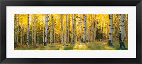 Framed Coconino National Forest, Arizona Print