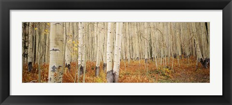 Framed Aspen, Colorado Print