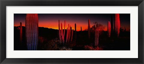 Framed Organ Pipe National Park AZ Print