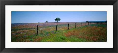 Framed Wildflower Field, Texas Print