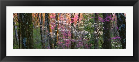 Framed Virginia, Shenandoah National Park Print