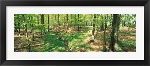 Framed Beech Forest Print