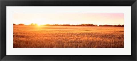 Framed Field in Canada Print
