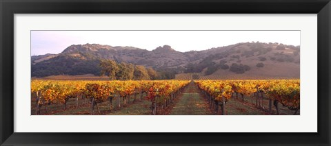 Framed Stag's Leap Wine Cellars, Napa Valley, CA Print