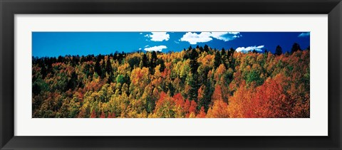 Framed Fall Durango, Colorado Print