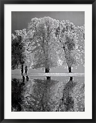 Framed Spring Reflections Print